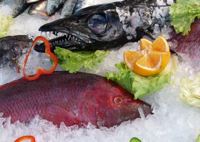 fish-213223